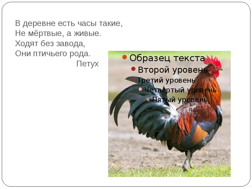 В деревне есть часы такие, Не мёртвые, а живые. Ходят без завода, Они птичьег...