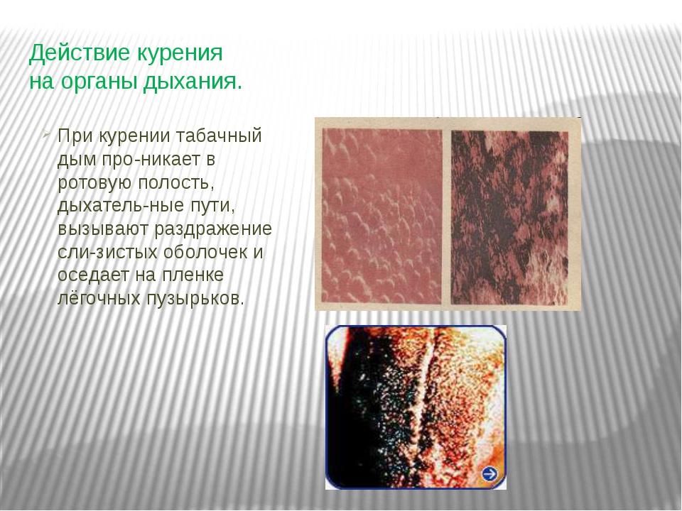 Действие курения на органы дыхания. При курении табачный дым про-никает в рот...