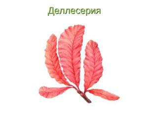 Деллесерия