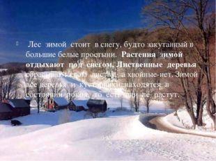 Лес зимой стоит в снегу, будто закутанный в большие белые простыни. Растения