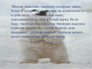 Многие животные, например полярные зайцы, белые и тундровые куропатки, не же