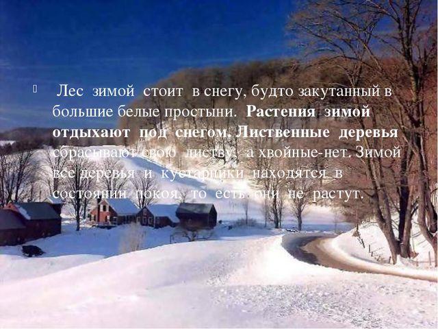 Лес зимой стоит в снегу, будто закутанный в большие белые простыни. Растения...