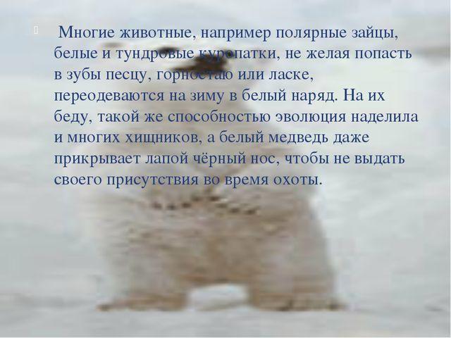 Многие животные, например полярные зайцы, белые и тундровые куропатки, не же...