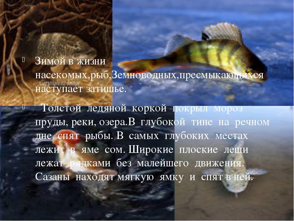 Зимой в жизни насекомых,рыб,Земноводных,пресмыкающихся наступает затишье. То...