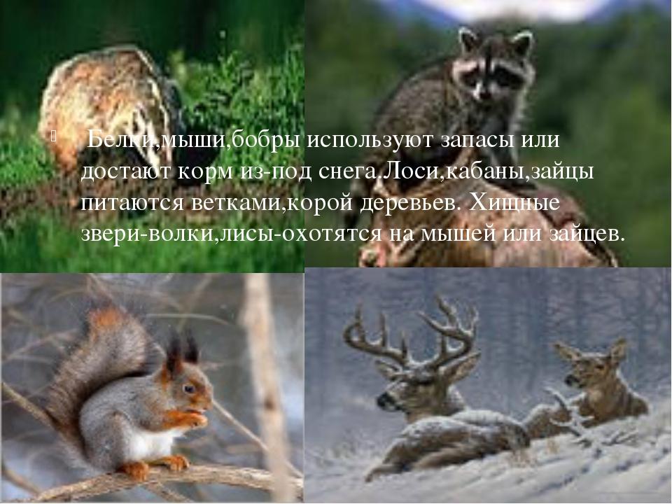 Белки,мыши,бобры используют запасы или достают корм из-под снега.Лоси,кабаны...