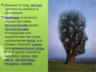 Деревья по видулистьевделятся на хвойные и лиственные. Хвойныеотличаются о