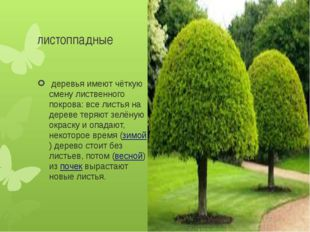 листоппадные деревья имеют чёткую смену лиственного покрова: все листья на д