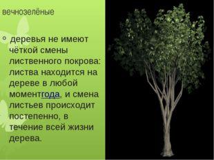 вечнозелёные деревья не имеют чёткой смены лиственного покрова: листва наход