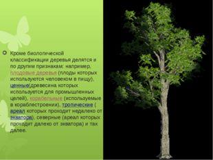 Кроме биологической классификации деревья делятся и по другим признакам: нап