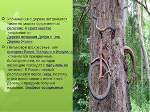 Упоминания о дереве встречается также во многих современныхрелигиях, вхрист
