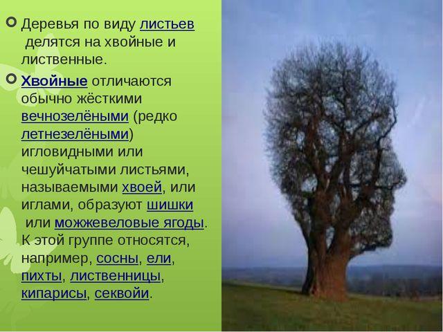 Деревья по видулистьевделятся на хвойные и лиственные. Хвойныеотличаются о...