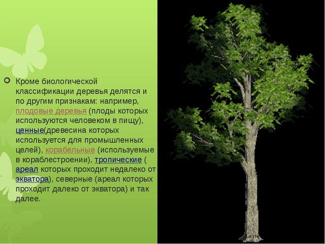 Кроме биологической классификации деревья делятся и по другим признакам: нап...