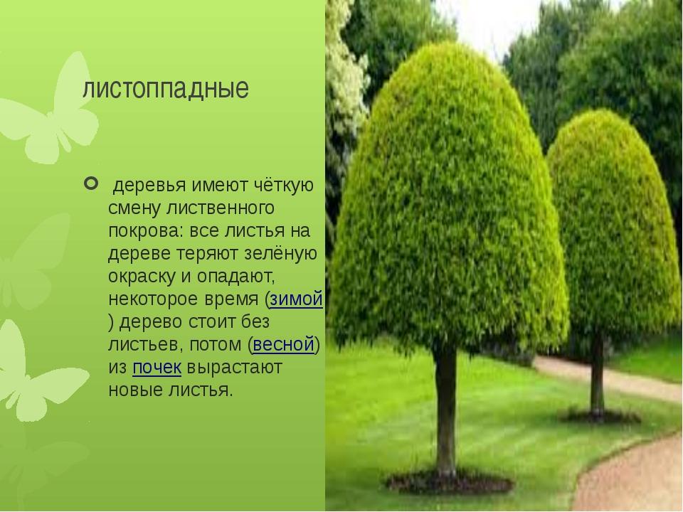 листоппадные деревья имеют чёткую смену лиственного покрова: все листья на д...