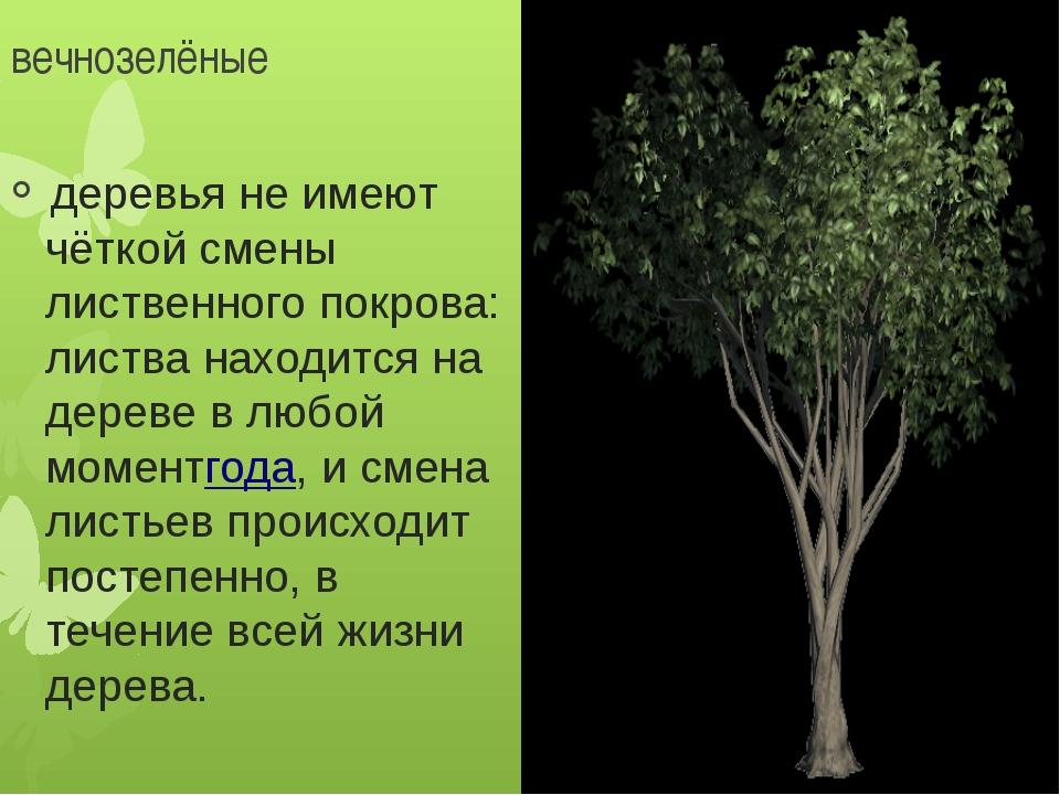 вечнозелёные деревья не имеют чёткой смены лиственного покрова: листва наход...
