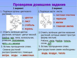 Проверяем домашнее задание 1 вариант 1. Подпиши органы цветкового растения.