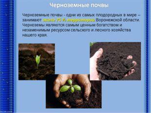 Черноземные почвы - одни из самых плодородных в мире – занимают около 75 % т