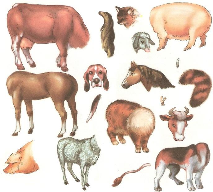 G:\домашние животные\gde_chey_hvost_6.jpg