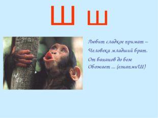 Ш ш Любит сладкое примат – Человека младший брат. От бананов до безе Обожа