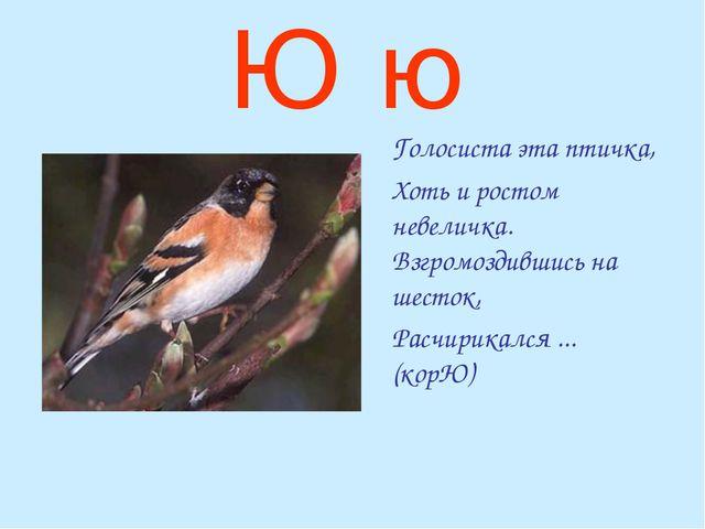 Ю ю Голосиста эта птичка, Хоть и ростом невеличка. Взгромоздившись на шесто...