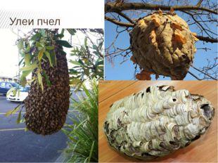 Улеи пчел