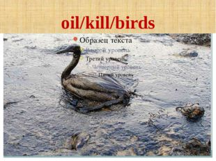 oil/kill/birds