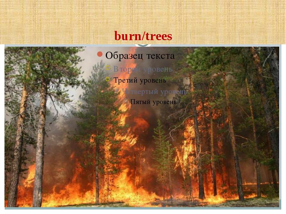 burn/trees