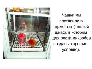 Чашки мы поставили в термостат (теплый шкаф, в котором для роста микробов со