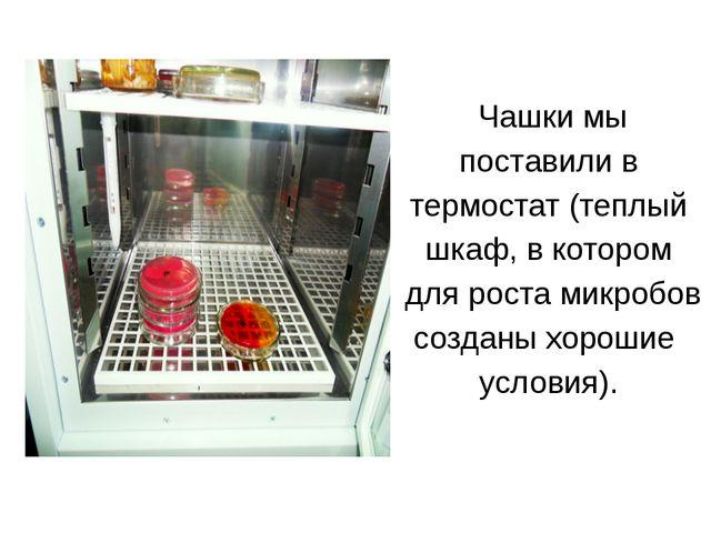 Чашки мы поставили в термостат (теплый шкаф, в котором для роста микробов со...