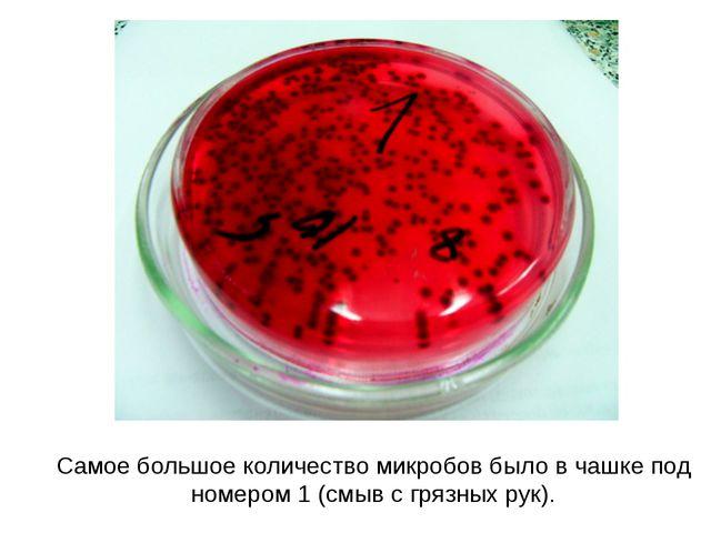 Самое большое количество микробов было в чашке под номером 1 (смыв с грязных...