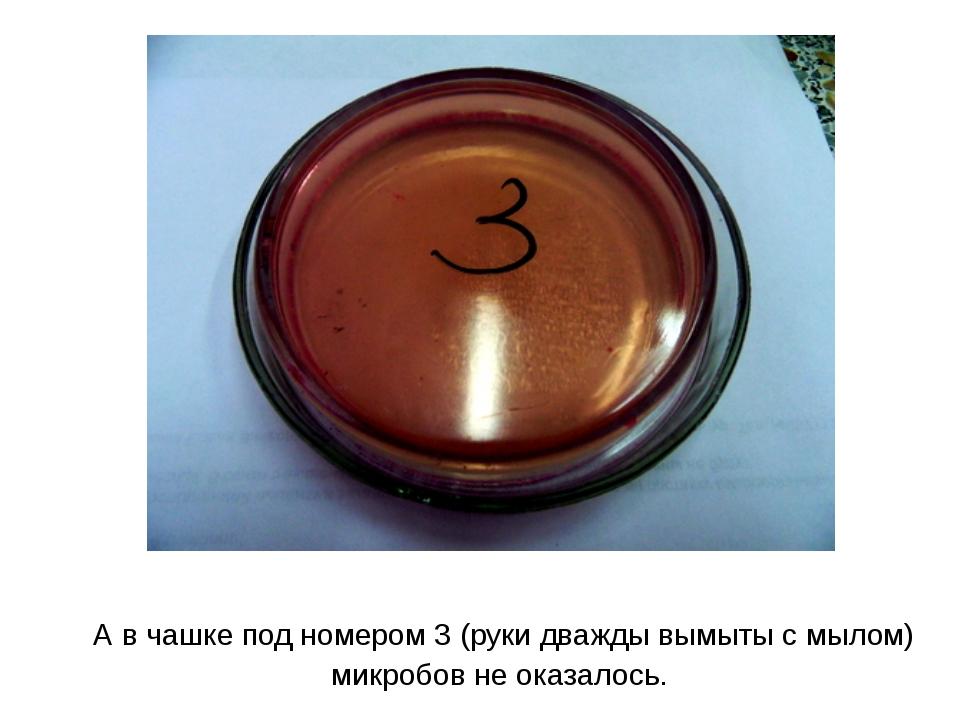 А в чашке под номером 3 (руки дважды вымыты с мылом) микробов не оказалось.