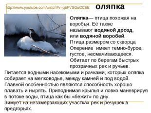 оляпка Оляпка—птица похожая на воробья. Её также называютводяной дрозд, или