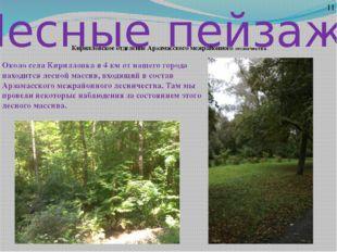 Лесные пейзажи 11 Кирилловское отделение Арзамасского межрайонного лесничеств