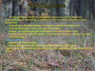 Ярусы леса В лесу растения имеют не одинаковую высоту, и поэтому образуют не