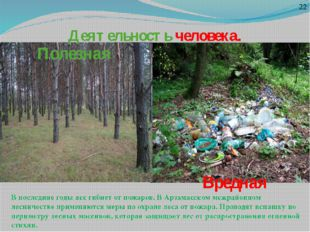 Деятельность человека. Полезная Вредная 22 В последние годы лес гибнет от пож