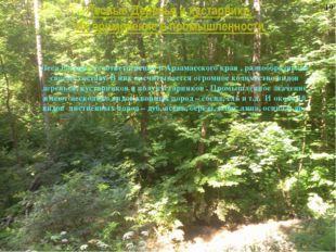 Лесные Деревья и кустарники. Их применение в промышленности Леса России, а со