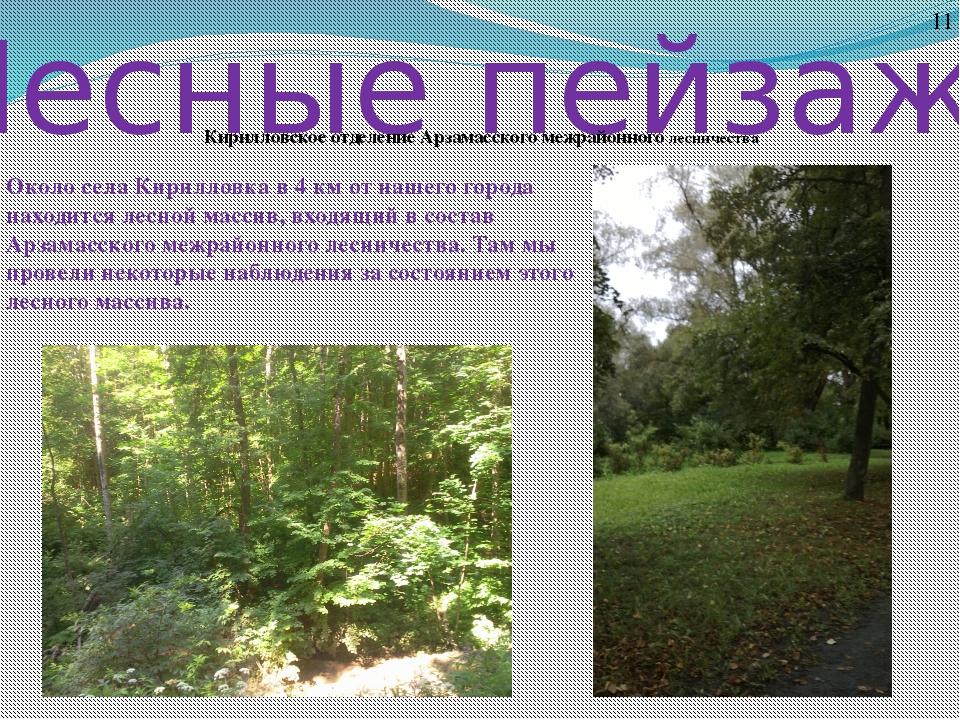 Лесные пейзажи 11 Кирилловское отделение Арзамасского межрайонного лесничеств...
