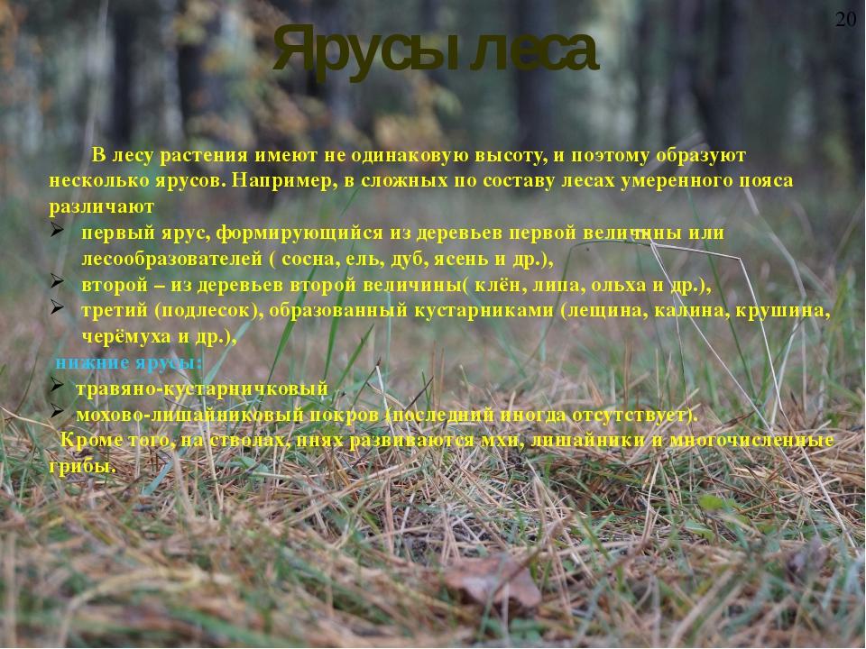Ярусы леса В лесу растения имеют не одинаковую высоту, и поэтому образуют не...