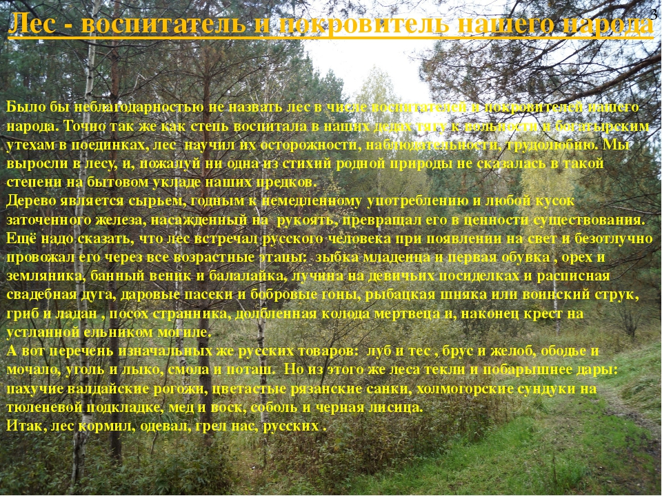 Лес - воспитатель и покровитель нашего народа Было бы неблагодарностью не наз...