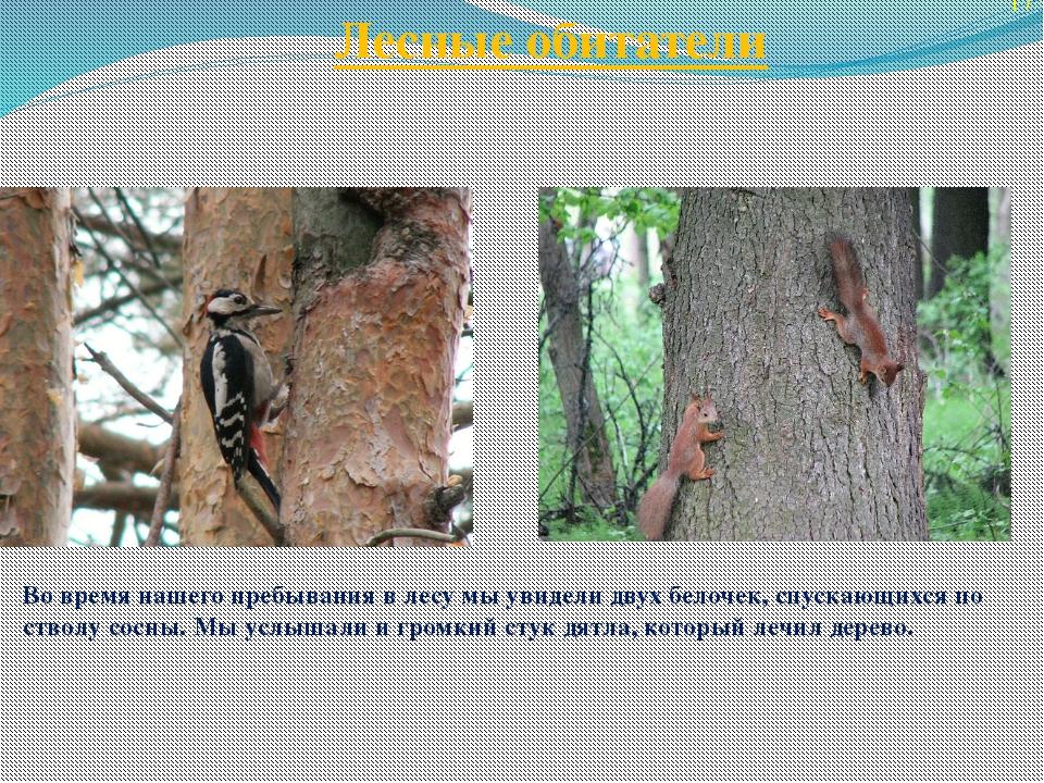 Лесные обитатели 17 Во время нашего пребывания в лесу мы увидели двух белочек...