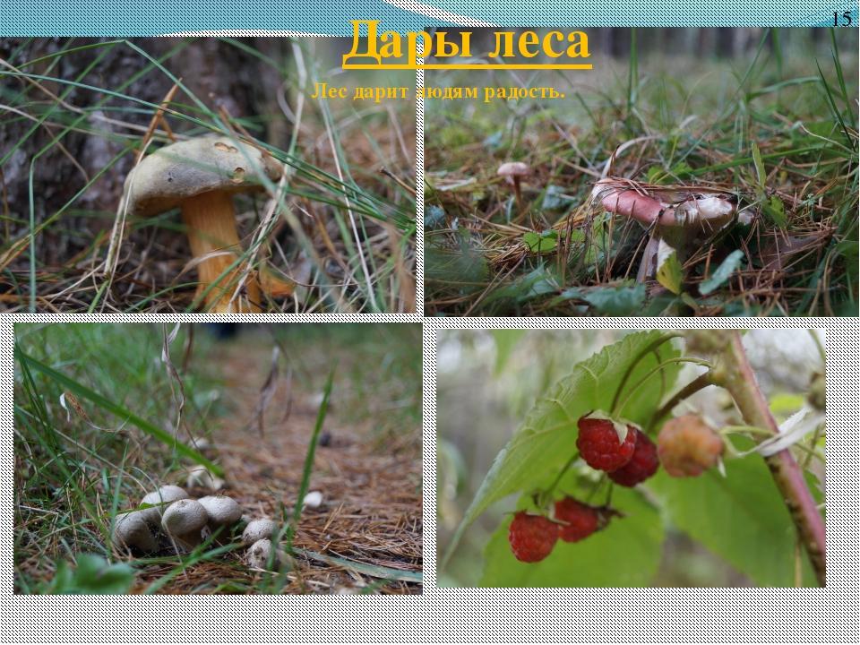 Дары леса 15 Лес дарит людям радость.