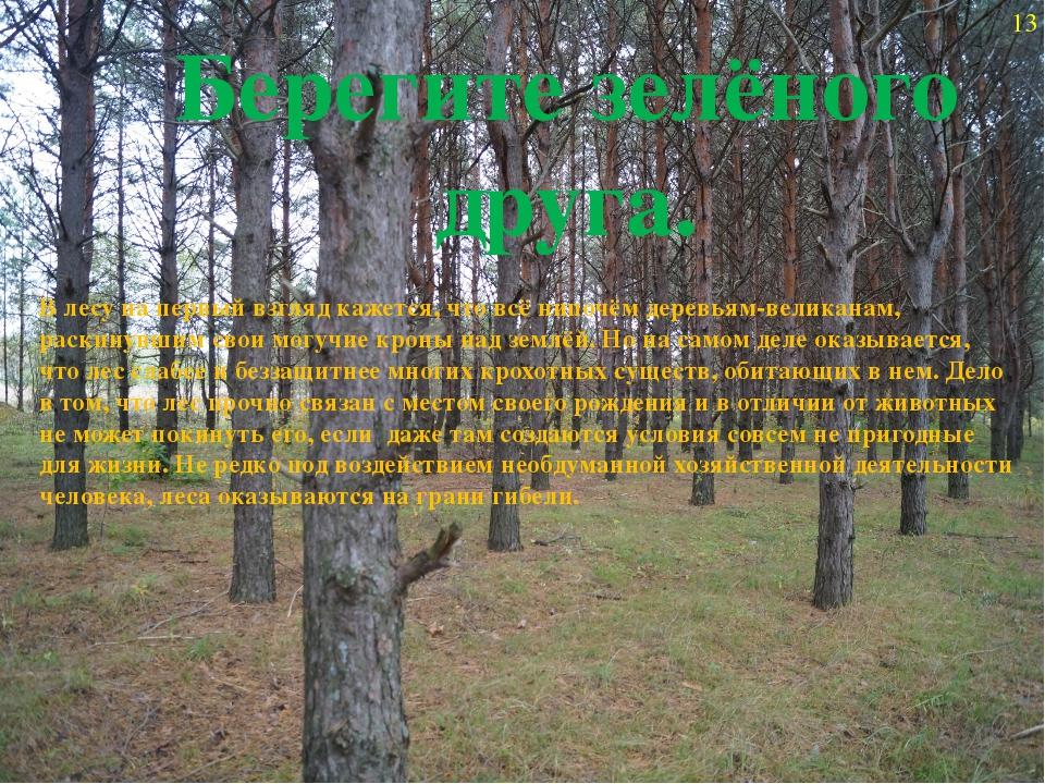 13 Берегите зелёного друга. В лесу на первый взгляд кажется, что всё нипочём...