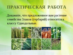 ПРАКТИЧЕСКАЯ РАБОТА Докажите, что предложенное вам растение семейства Злаков