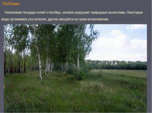 Проблемы! Увеличивая площади полей и пастбищ, человек разрушает природные эк