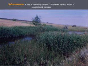 Заболачивание, в результате поступления и скопления в оврагах воды от оросите