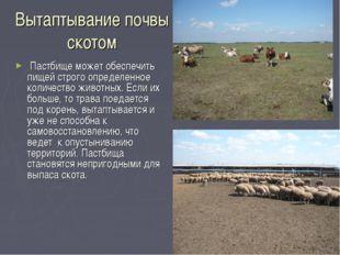 Вытаптывание почвы скотом Пастбище может обеспечить пищей строго определенное