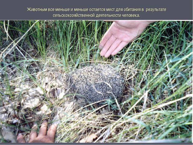 Животным все меньше и меньше остается мест для обитания в результате сельскох...