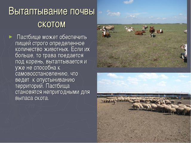 Вытаптывание почвы скотом Пастбище может обеспечить пищей строго определенное...