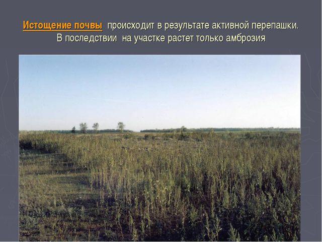 Истощение почвы происходит в результате активной перепашки. В последствии на...