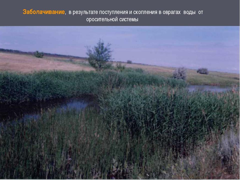 Заболачивание, в результате поступления и скопления в оврагах воды от оросите...