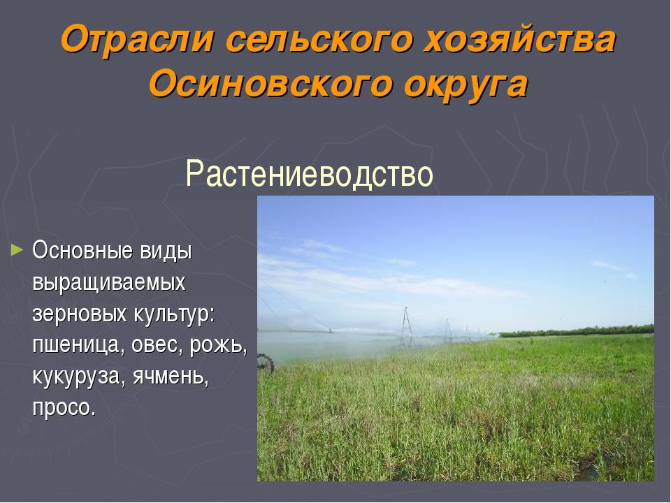 Отрасли сельского хозяйства Осиновского округа Основные виды выращиваемых зер...